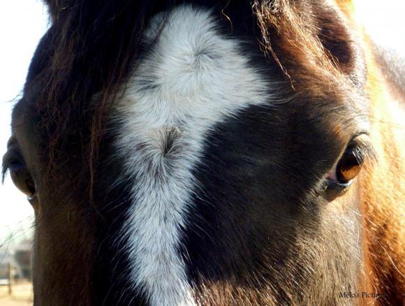 http://cheval-forever.cowblog.fr/images/Bonita15.jpg